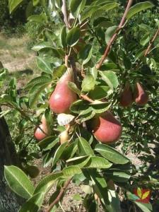 Rasadnik Fruit Company Milovanović 018