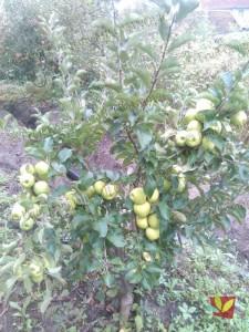 Rasadnik Fruit Company Milovanović 038
